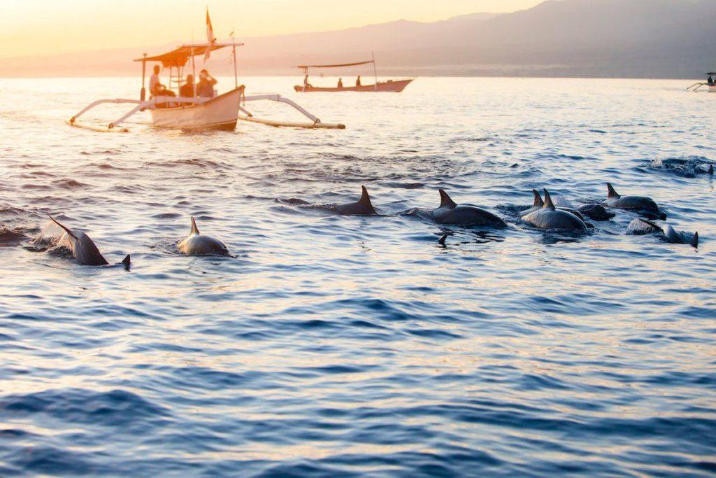 На пляже Ловина можно посмотреть на дельфинов