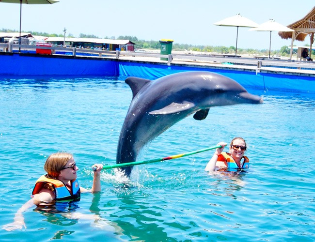 Посетите дельфинарий Dolphin Lodge Bali если едите на с Санур Бич